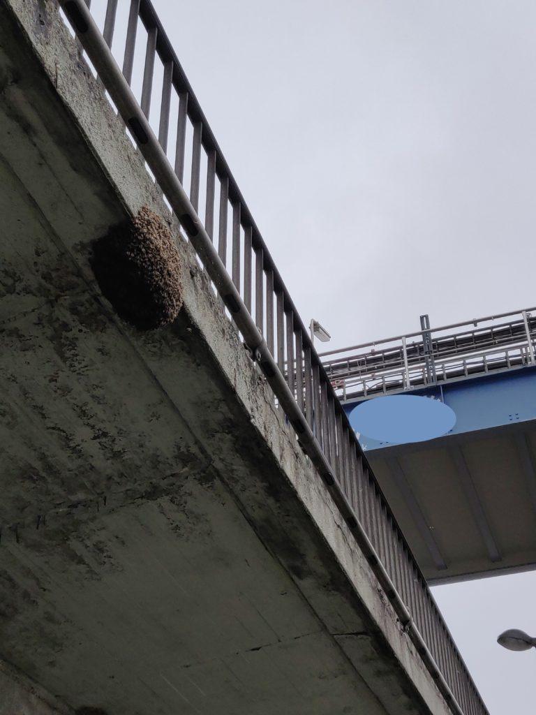Bienenschwarm an einem Übergang / Brücke Nahaufnahme